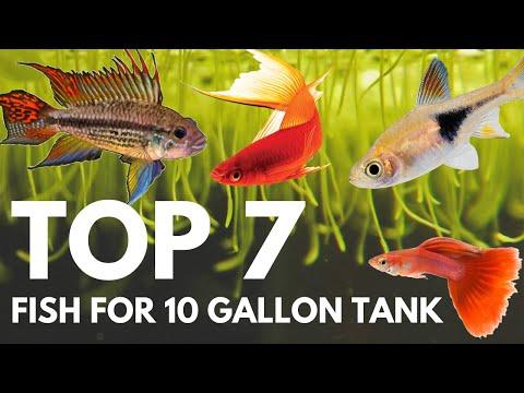 Top 7 Fish For A 10 Gallon Aquarium