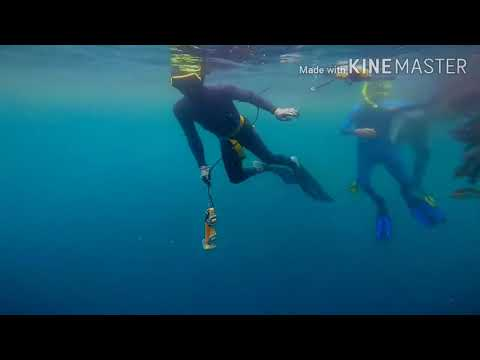 Freediving Variable Weight And Spearfishing Safety