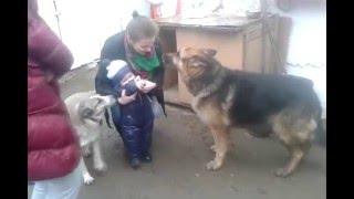 Малыш и собаки! Дружба и социальная ответственность!