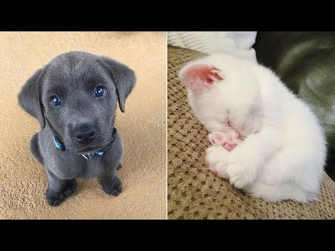 Cutest Baby Dog and Cat Doing Funny Things - Cute and Funny Dog Videos Compilation ♥ #5