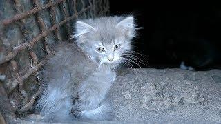 Kittens still live in the basement