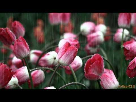 Deszcz. Rain (HD)