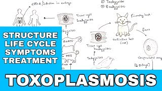 Get to know toxoplasmosis with a smile on your face! A few notes: (Watch the video first or you won'.