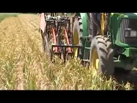 Mecanización para el cultivo de ajo por JJ Broch