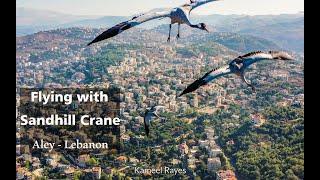 Flying with Sandhill Crane | مع طائر الكركي الشائع جنبا الى جنب | Lebanon - Aley