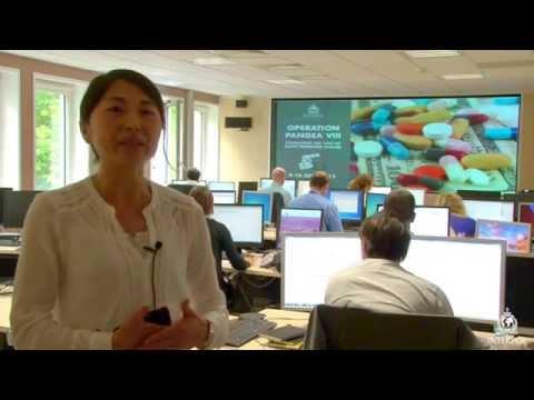 Operation Pangea VIII: Junko Yamamoto, World Customs Organization