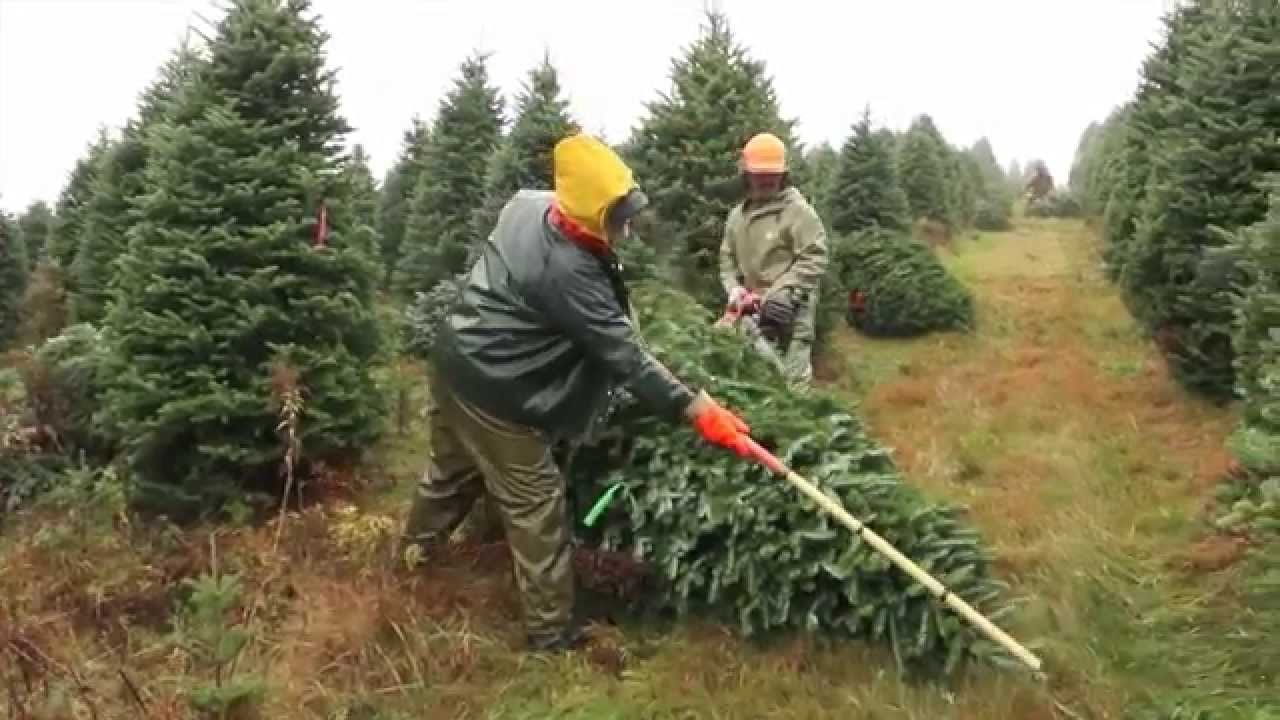 Christmas Tree Production By Valfei
