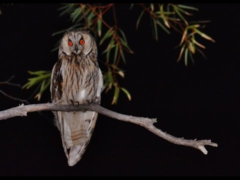 21 min.  documentary about 5 Owls of Cyprus by George Konstantinou