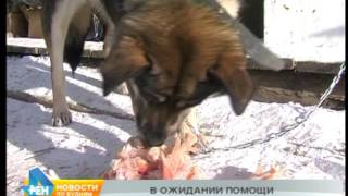 Нечем кормить собак в приюте в Карлуке. Сейчас там более 500 животных