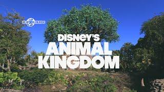 Скачать Animal Kingdom Disney World 3