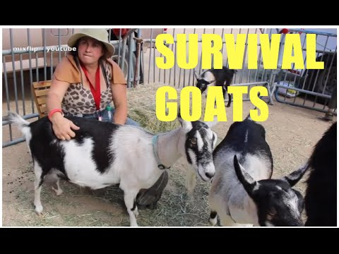 survival goats!!! for off grid living & even bugging out