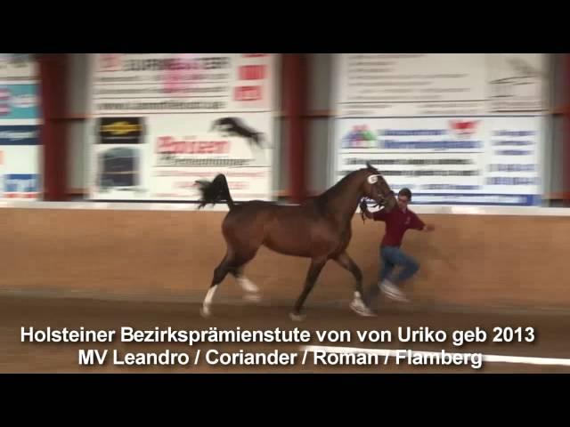 Holstein district premium mare by Uriko