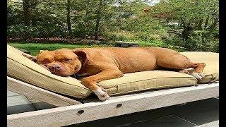 長年コンクリートの上で暮らしていた犬、「ふかふかベッド」を溺愛♪ 続...