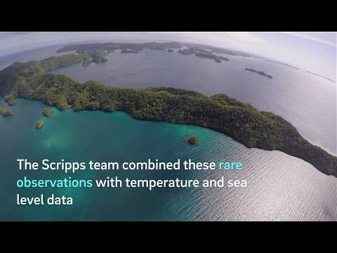 Coral Reefs in Deeper Waters Under Stress Too