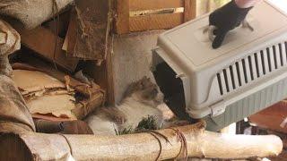 Бездомные животные: над этим видео плачет вся Пермь (история спасения кошек)