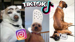 FUNNIEST DOG COMPILATION  AMAZING DOG VIDEOS
