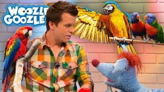 Können Papageien sprechen? l WOOZLE GOOZLE