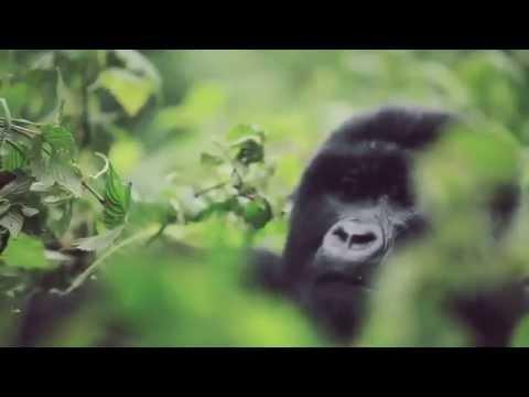 Rwanda Tourism Video