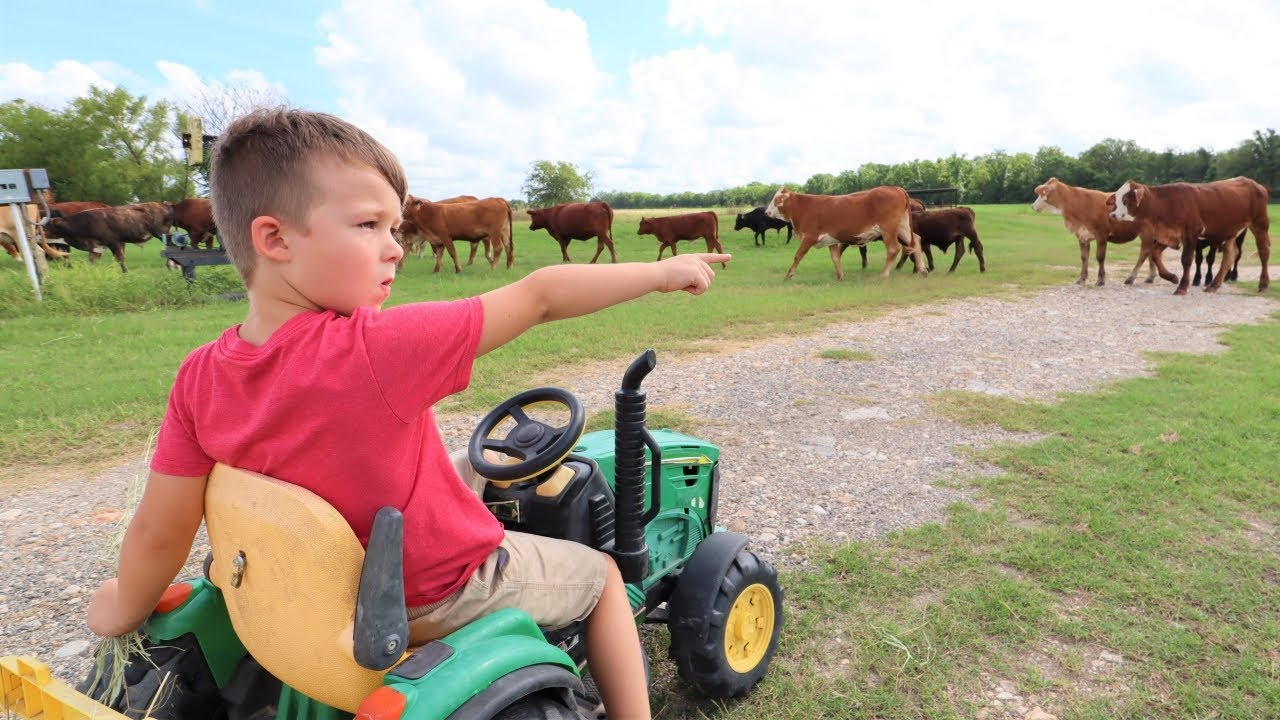Using tractors and hay to help lost cows   Tractors for kids