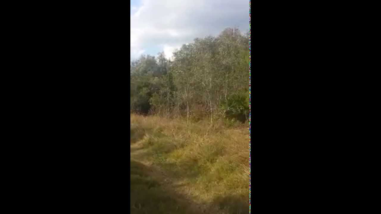 bokeelia 1 2 acre uncleared lot for sale   youtube