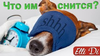 МОЯ СОБАКА СПИТ | ИНТЕРЕСНЫЕ ФАКТЫ | Elli Di Собаки