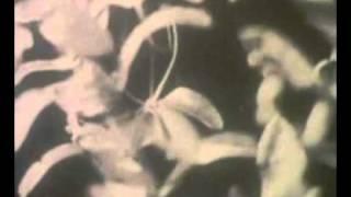 Гидра и её движение.avi