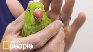 Operacja ptaszka była bardzo ryzykowna! [Doktor Miller i jego zwierzęta]