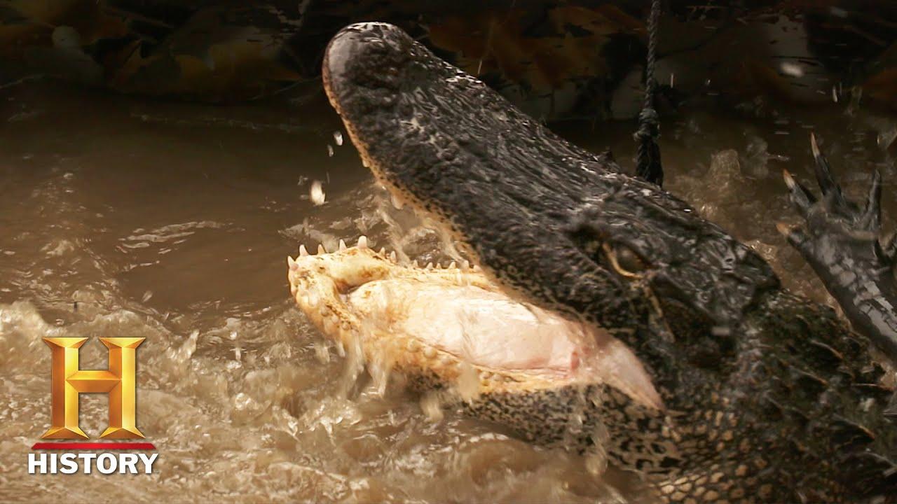 Swamp People: MAJOR COLD FRONT Threatens Huge Gator Haul (Season 12) | History