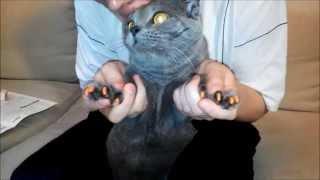 Как наклеить коту насадки на когти