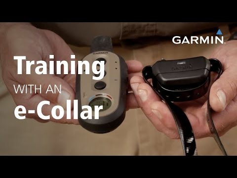 garmin:-training-with-an-e-collar