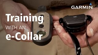 Garmin: Training with an e-Collar
