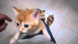 萌翻了!主人牛奶泡太慢...被小貓群起圍攻~~