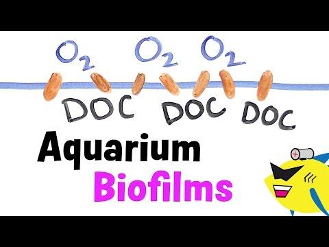 Aquarium Biofilms: Learn About, Prevent And Eliminate