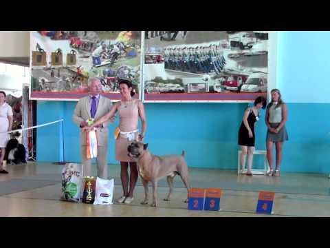 Монопородная выставка кане-корсо. Владивосток 03.07.2016.
