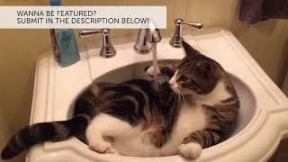 Cutest Cats Playing in Water Compilation 2018 | Best Cute Cat ...