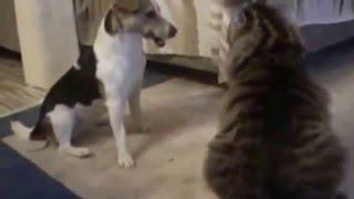 Нарезка коты дерутся с собаками