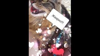 Кот дышит, как собака!!!