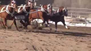 Young Gunz Chariot Racing 2013 & 2014...