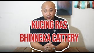 kucing ras bhinneka cattery