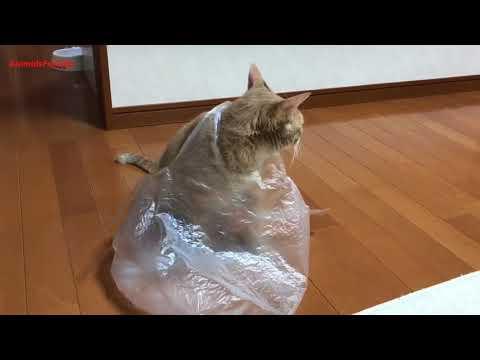 Cat Wear A Plastic Bag Fail