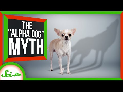 "No, Your Dog Doesn't Think You're the ""Alpha"""
