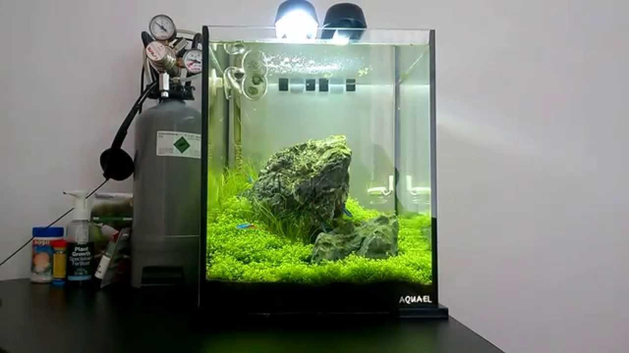Iwagumi Aquael Shrimp Set 30 Shrimp Aquascape Week 5 Youtube