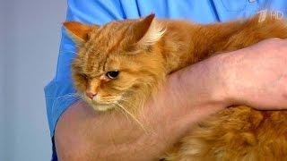 Жить здорово! Три теста для владельцев кошек. (01.03.2016)