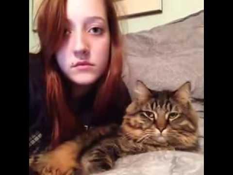Ритмичный кот. Качает)