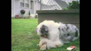 funny dog smoking video movie