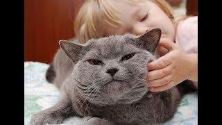 Лечение стресса Котятами! Кошкотерапия!