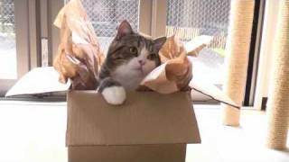 箱とねこ4。-A box and Maru 4.-