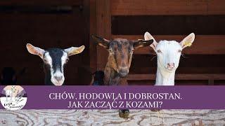 32 Chów, Hodowla i dobrostan zwierząt. Jak zacząć z kozami biznes?