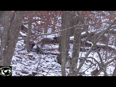 West Virginia Buck Hunt ~ Mountain State Outdoors