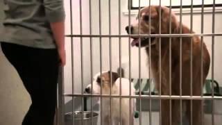 Предательство людей и верность собак  До слез